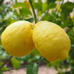 lemon-1117562_960_720